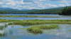 Tupper Lake Marsh