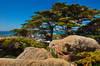 Point Lobos 04