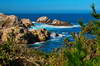 Point Lobos 14