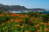 Point Lobos 19
