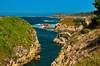 Point Lobos 20